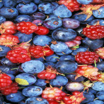Eat Some Berries for your Brain